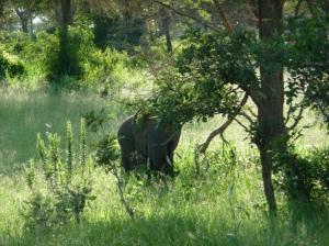 Mikumi National Park, Tanzania, OTA - Overland Travel Adventures www.ota-responsibletravel.com