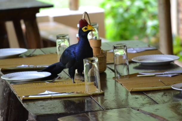 OTA Kenya Safaris www.ota-responsibletravel.com